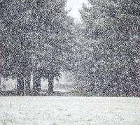 Снег и приворот